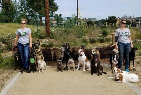 Dog Walking Service Long Beach Ca